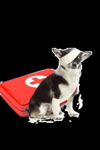 http://www.vetloup.fr/wp-content/uploads/2015/11/Urgences-veterinaires-320x480.png