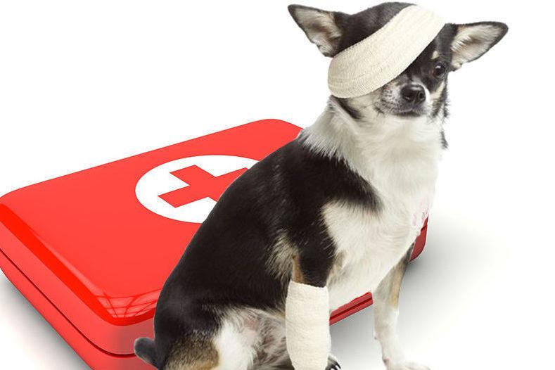 http://www.vetloup.fr/wp-content/uploads/2015/11/Urgences-veterinaires-e1507565427119.jpg
