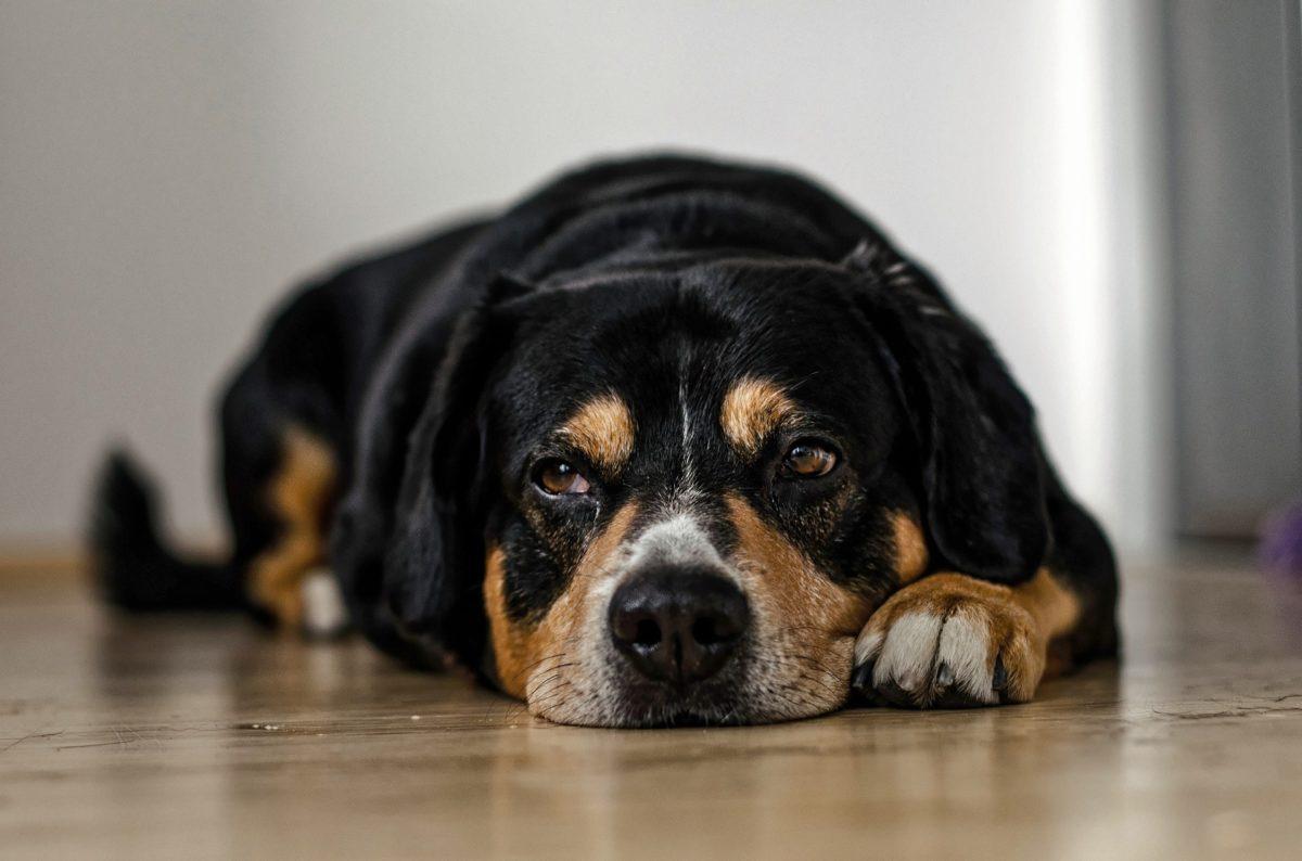 dogs-958216_1920-1200x794.jpg