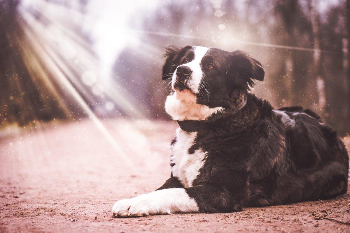 dog-2201996_1920-1-1200x800.jpg