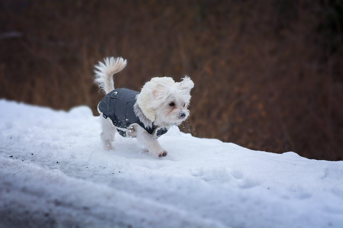 Chien_neige-1-1200x799.jpg