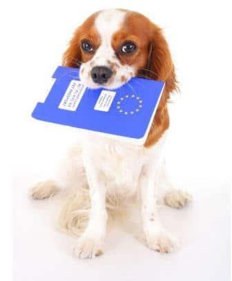 Conseils santé chiens. Kovacs Agnes Zsofia -123RF/Banque d'images
