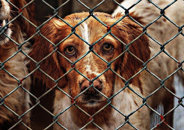 animal-welfare-1116205_640.jpg