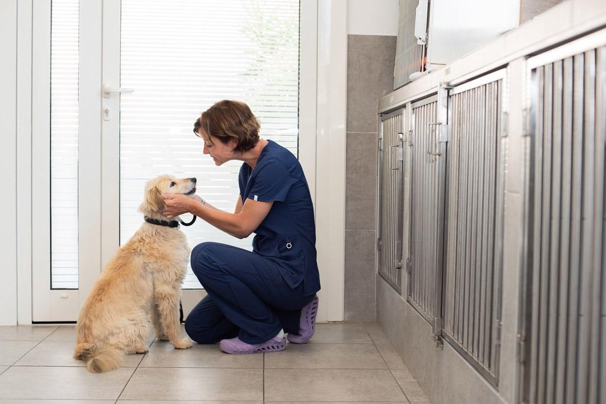 Veterinaire la Colle sur Loup Hospitalisation 5