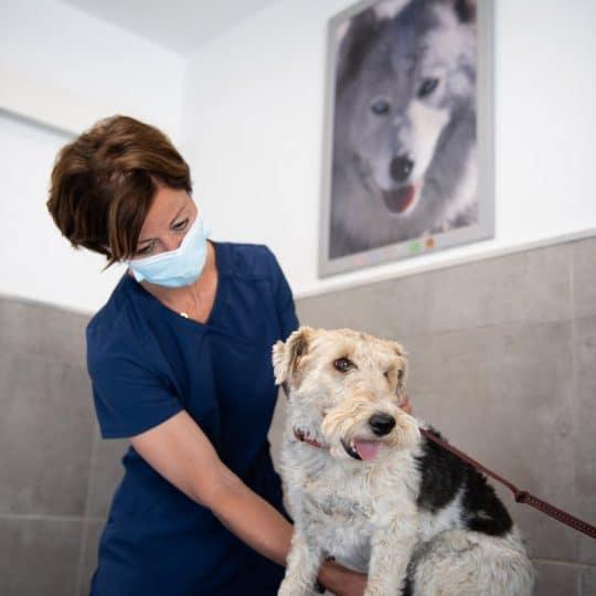 Veterinaire La Colle sur Loup Dr DEVOS 5