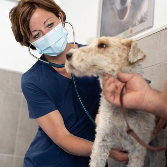 Veterinaire La Colle sur Loup Dr DEVOS 6