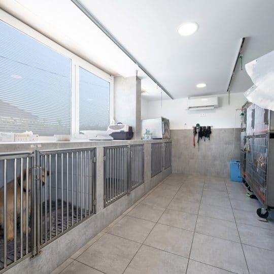 Veterinaire la Colle sur Loup Hospitalisation 2