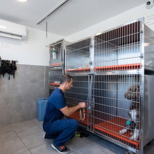 Veterinaire la Colle sur Loup Hospitalisation Cédric